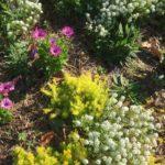 Verge Planting – Brisbane City Council Guidelines thumbnail