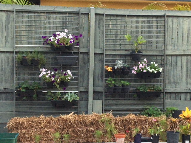 Pool fences as vertical garden supports