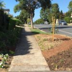 Verge Garden – Native bed around the Street Tree thumbnail